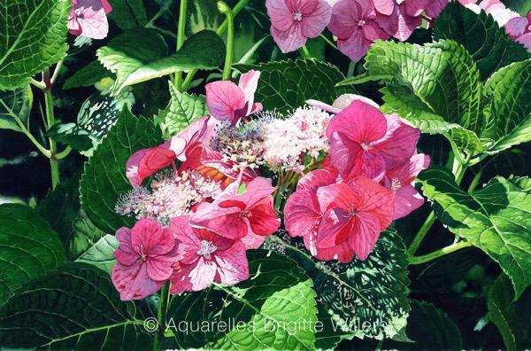 Couleur hortensia(34x52cm)<br/>© Aquarelle Brigitte Willers.