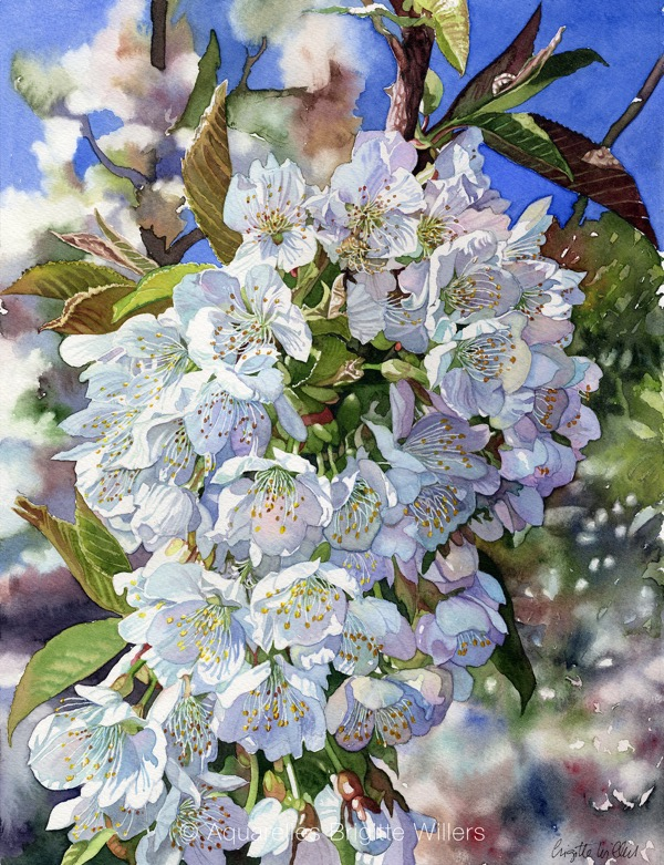Fleurs de cerisier (36x27cm) <br/>© Aquarelle Brigitte Willers.