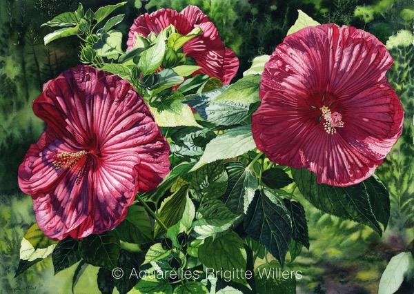 Ibiscus de Mylêne (47x66cm)<br/>© Aquarelle Brigitte Willers.