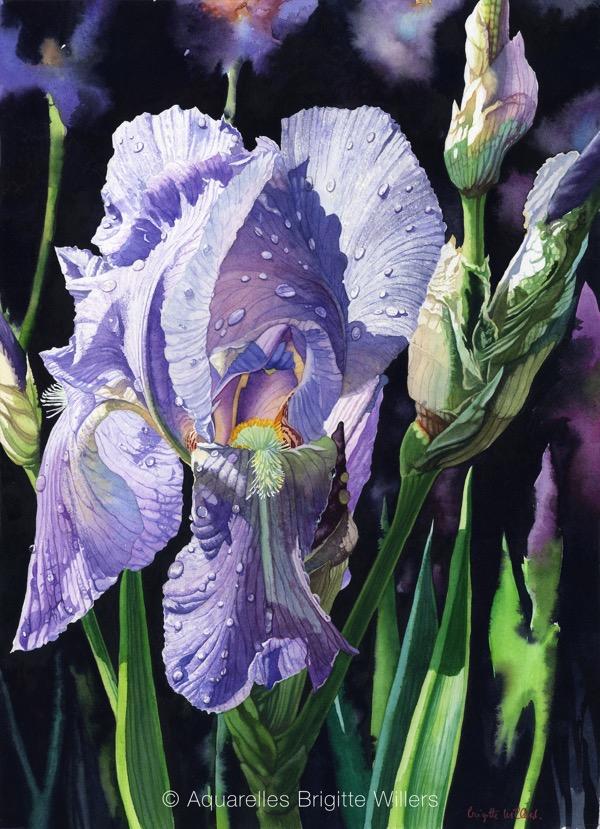 Iris bleu (55x40cm)<br/>© Aquarelle Brigitte Willers.