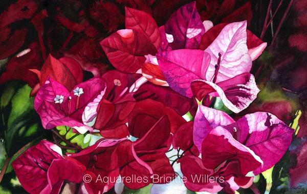 Les bougainvilliers (31x50cm) <br/>© Aquarelle Brigitte Willers.