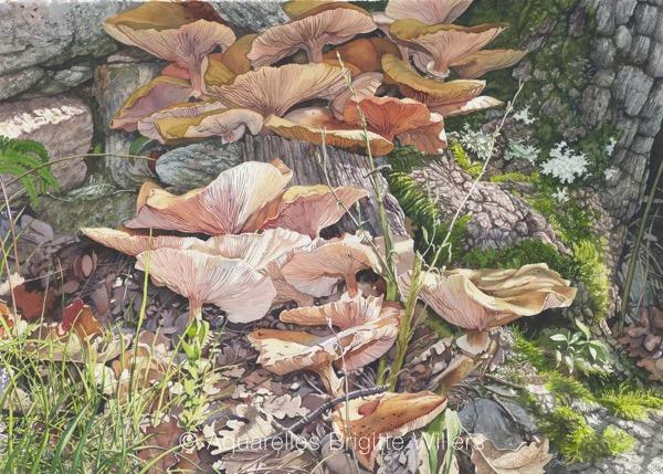Minéral Végétal (47x65cm) <br/>© Aquarelle Brigitte Willers.