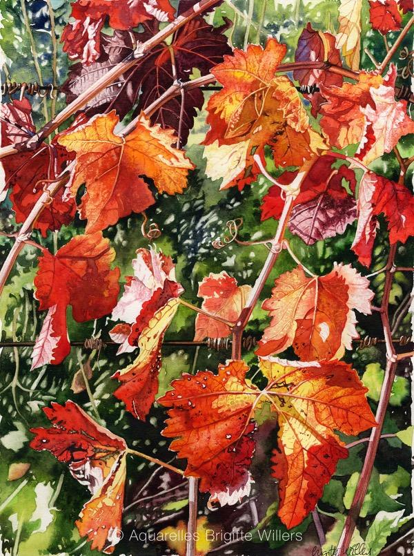 Vigne rouge (38x28cm)<br/>© Aquarelle Brigitte Willers.