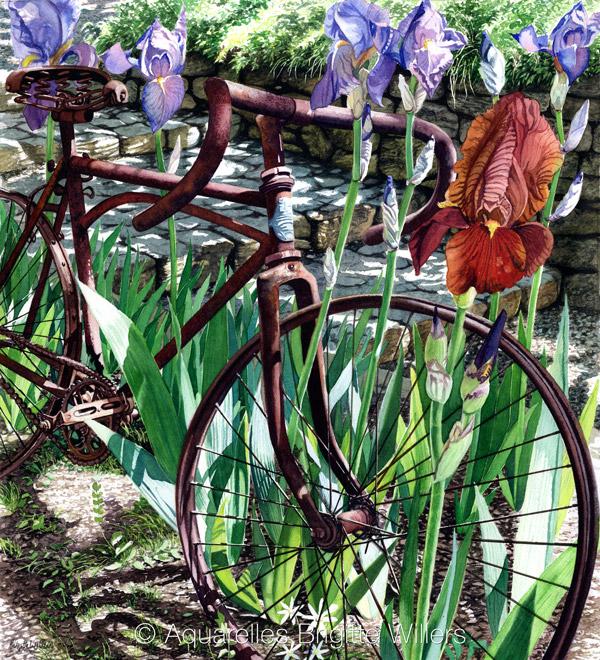 Le vélo de David (48x44cm) <br/>© Aquarelle Brigitte Willers.