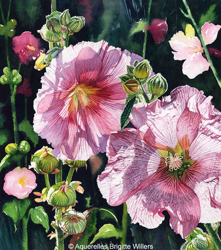 Contre jour aux roses (46 x 41 cm)<br/>© Aquarelle Brigitte Willers.