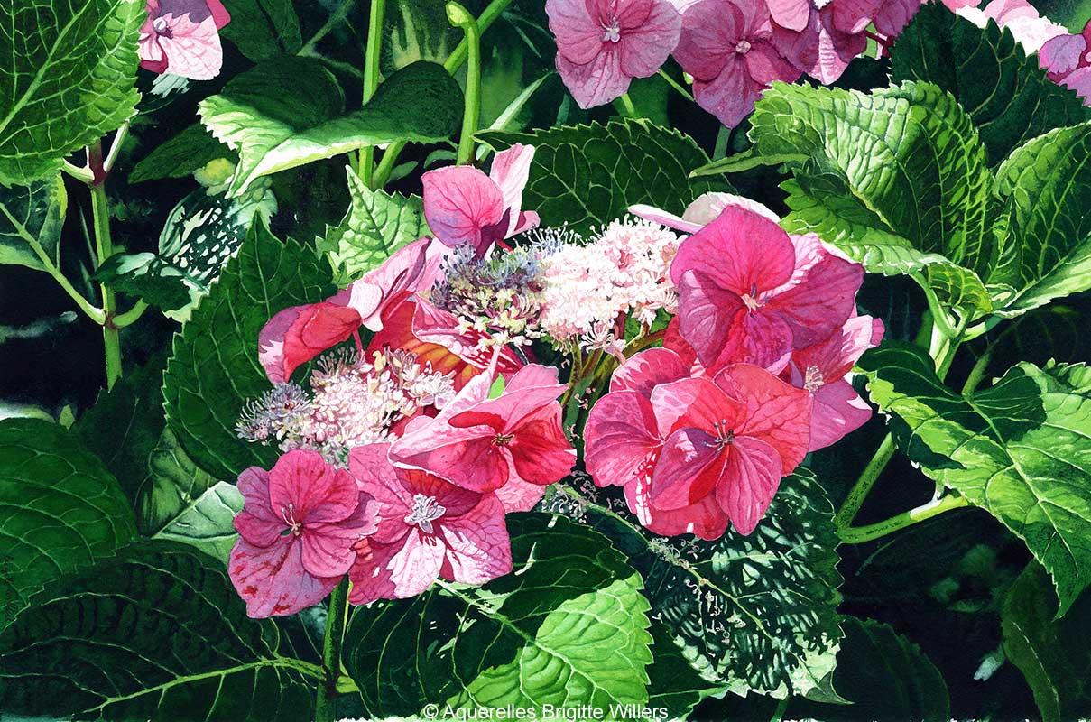Couleur hortensia (34 x 52 cm)<br/>© Aquarelle Brigitte Willers.
