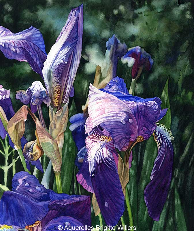 Iris (46 x 38 cm)<br/>© Aquarelle Brigitte Willers.