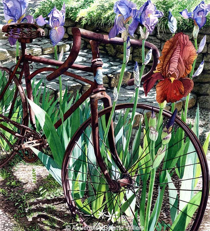 Le vélo de David (48 x 44 cm)<br/>© Aquarelle Brigitte Willers.