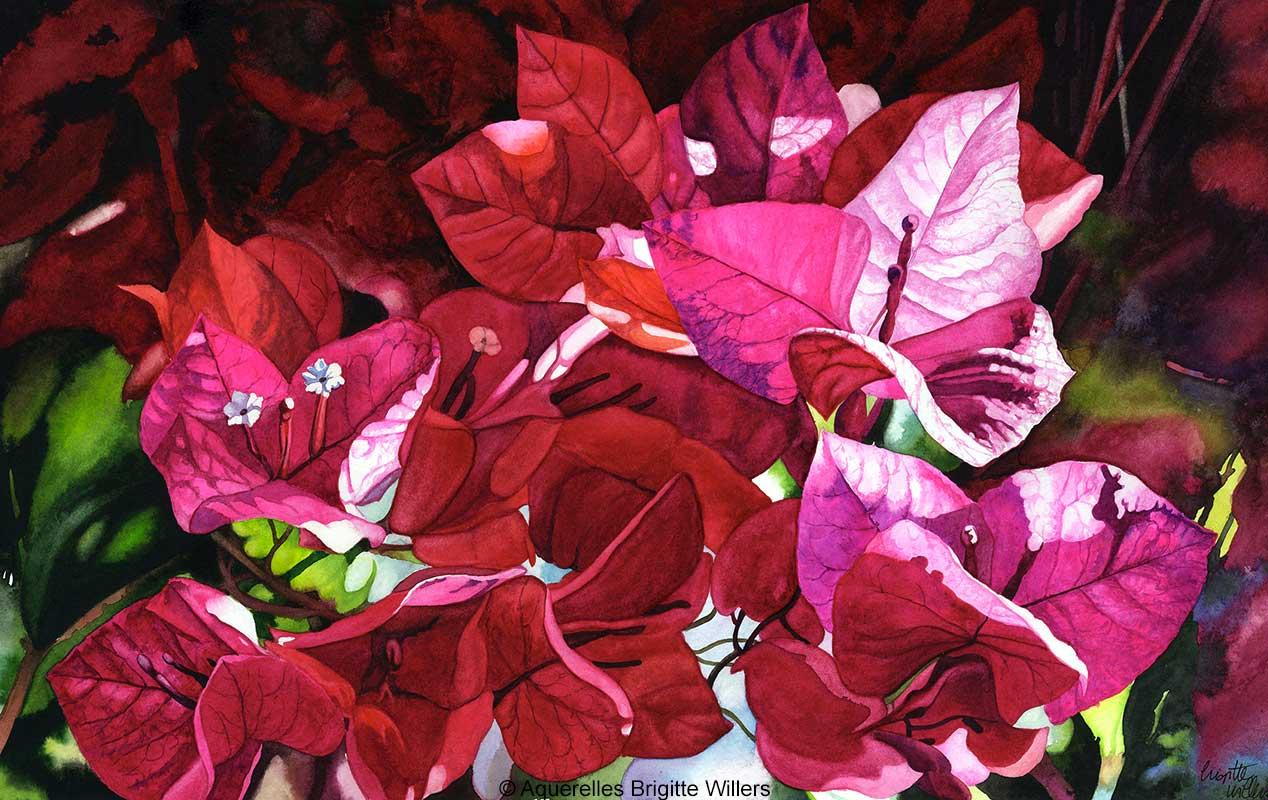 Les bougainvillées (31 x 50 cm)<br/>© Aquarelle Brigitte Willers.