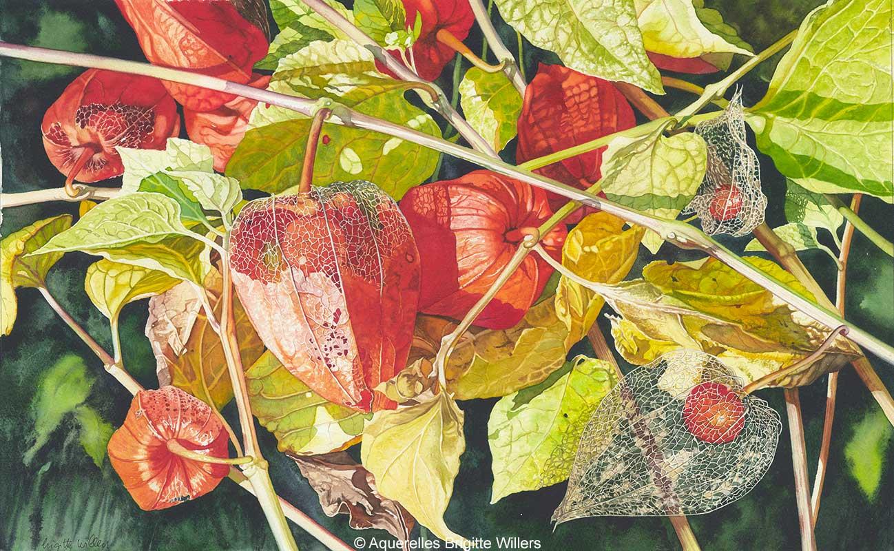 Mes amours en cage (35 x 59 cm)<br/>© Aquarelle Brigitte Willers.