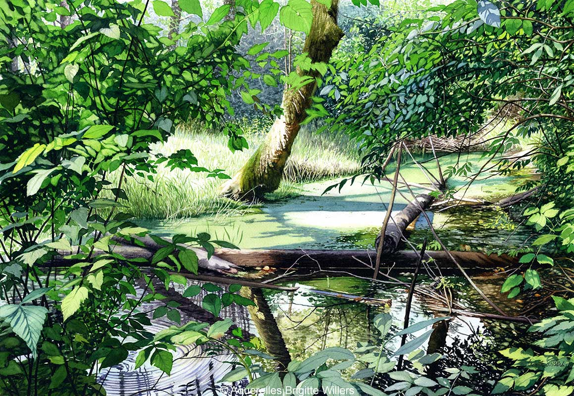 Vert (43 x 62 cm)<br/>© Aquarelle Brigitte Willers.